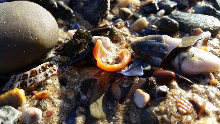 Beach Combing | Flickr - Photo Sharing!