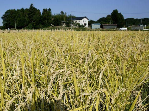 Una Villa de Energía Renovable ha empezado a ser construida en zonas agrícolas contaminadas por la radiación de la central nuclear Fukushima I que colapsó en Japón. La visión de combinar paneles solares con cultivos pretende inspirar a los agricultores japoneses a reclamar sus abandonados estilos de vida.
