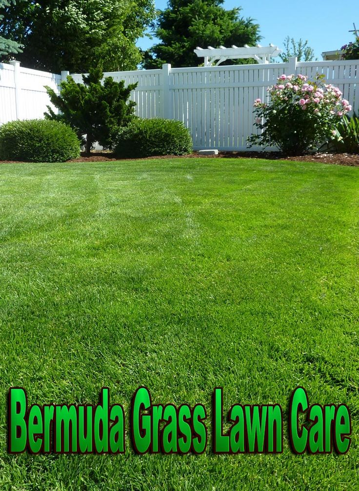 When a yard with Bermuda grass is thirsty, its blades will actually bow down a little. Because Bermuda grass proves to be among the most drought resistant kinds of grass, it only really needs to be watered once to twice per week.  Aerating: most people should rent a core aerator. Aerating turns out to be similar to mowing the lawn, but doing it two times. The lawn should be properly aerated first in one direction, then in another one which is at a ninety degree angle to the first one. Aerate…