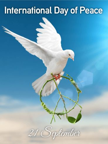 Flying White Dove - International Day of Peace Card : Throughout history, war and dissent have plagued people around the world. People have lost homes, family, friends, and hope as destruction, chaos, and fear filled their countries and lives. This year, celebrate with an International Day of Peace card and use this as a time to love your neighbors and help those who need it. Instead of war and pain, offer hugs and encouragement to promote peace in your own life and the lives of those around…