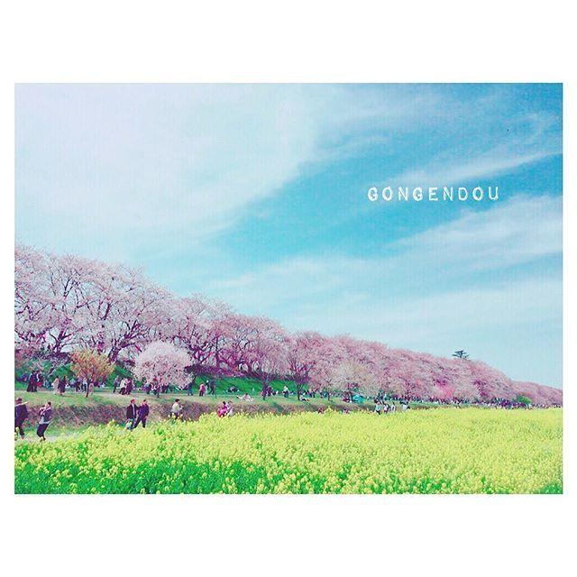 【__mieecha__】さんのInstagramをピンしています。 《2017.1.26 * 昨日載せた写真はここで撮りました📷 埼玉のお花見スポットです🌸 観光バスが来るほど大人気だから 朝早くがオススメらしい☺✨ お弁当とカメラを持って ぜひ行ってみてください🌸🍡 * * #お花見スポット #権現堂 #埼玉 #桜 #sakura #spring #japan #flower #カメラ女子 #写真好きな人と繋がりたい  #お洒落さんと繋がりたい #instagood #instapic #instalike》