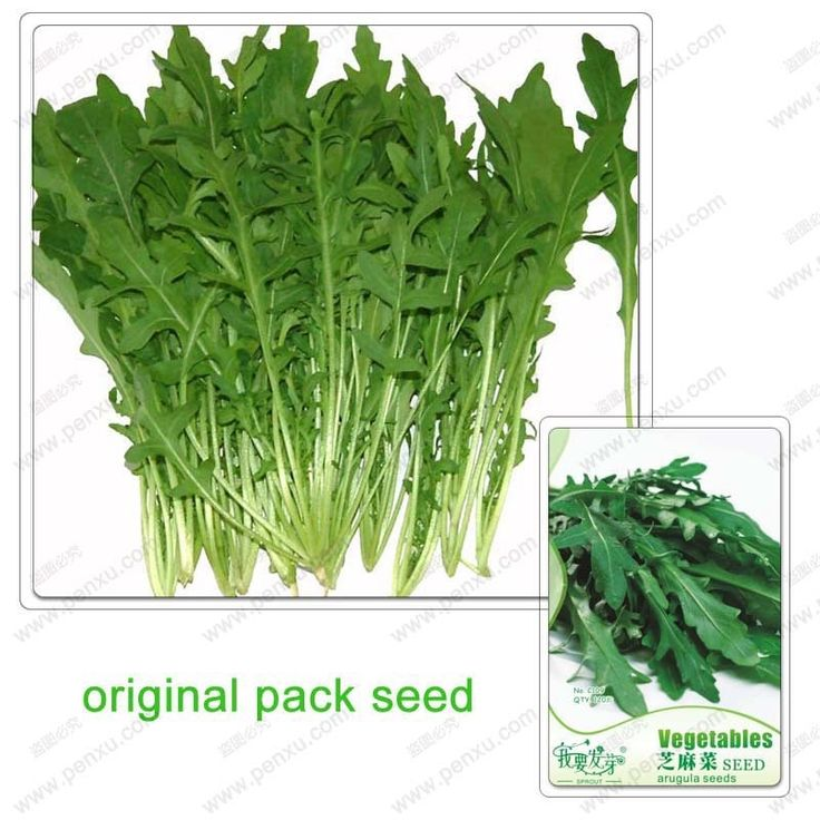 0.74$  Watch here -  120 Seeds / Pack,Vegetable Eruca sativa seeds,arugula,Potted plant balcony Vegetable,plant seeds   #buyininternet