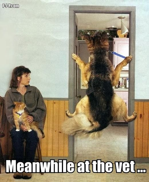 Meanwhile at the vet...