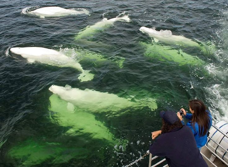 One of many less-explored areas of Canada, Churchill is a great place to interact with wildlife on land and in the sea. // © 2015 Tourism New Brunswick