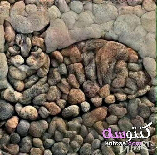 فن الحجر زلط ديكور فن الرسم على الزلط اجمل فنون الرسم علي الاحجار والزلط اجمل شغل بالزلط الملون Kntosa Com 22 19 156 Stone Art Pebble Art Cat Art