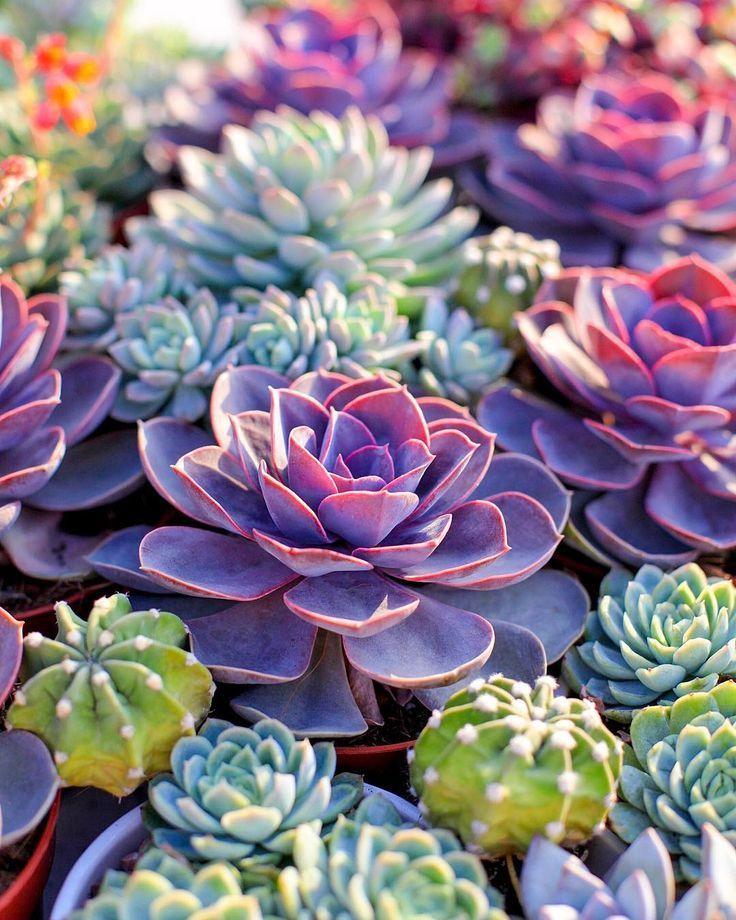 Desert Plants Painting