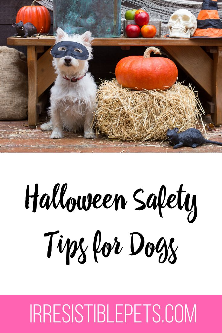 Halloween Safety Tips for Dogs in 2020 Halloween safety