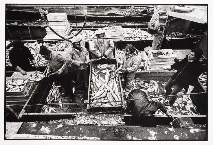 HD57 Elvira. Een rondviskotter, Joost Guntenaar, 1981