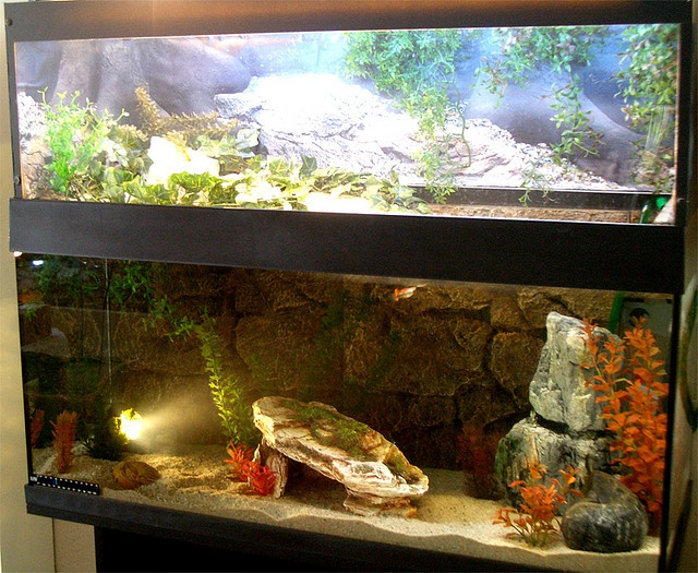 ... Ear Slider on Pinterest Glass aquarium, Aquatic turtles and Aquarium