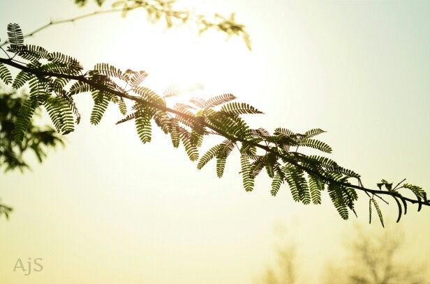 The reason i like this picture, is the simplicity. The way the sun brings out the leaves without dominating the frame.