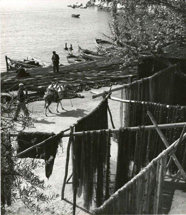 Σκιάθος 1960.