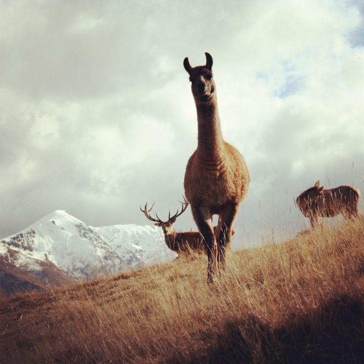 Beautiful nz scenery (photograph by Kirsty Tull)