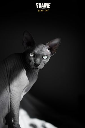 Best CAT PHOTOGRAPHY Images On Pinterest Beautiful Cats And - This photographer is celebrating stray cats through majestic portrait photographs