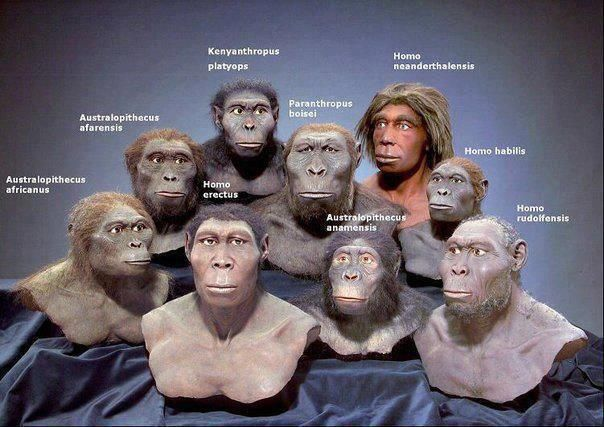 Exposing Religion Blog, The Complete Human Evolution Evidence Database