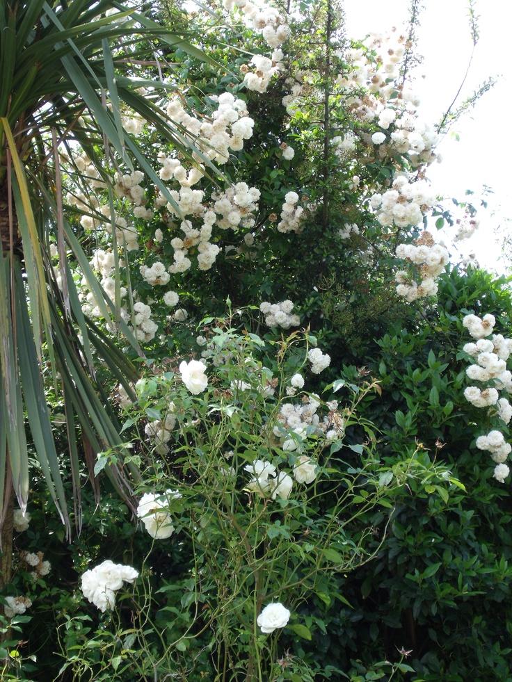 June roses 2012