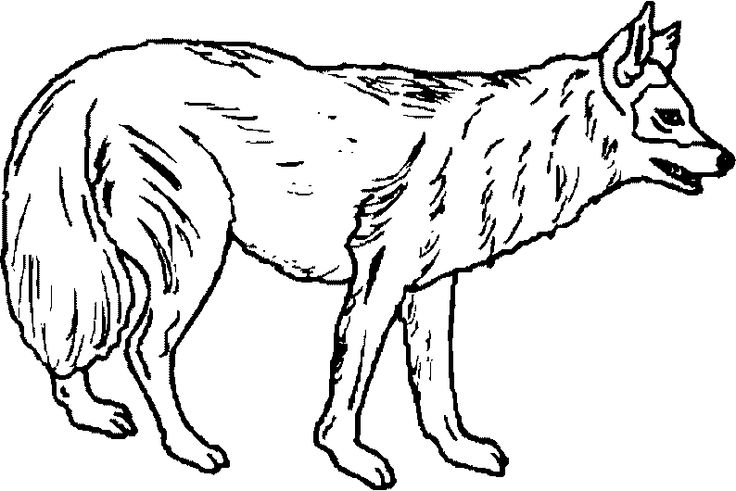 angry arctic wolf coloring pages - photo#49