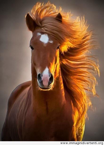 Cavallo ridicolmente fotogenico, Immagini Divertenti