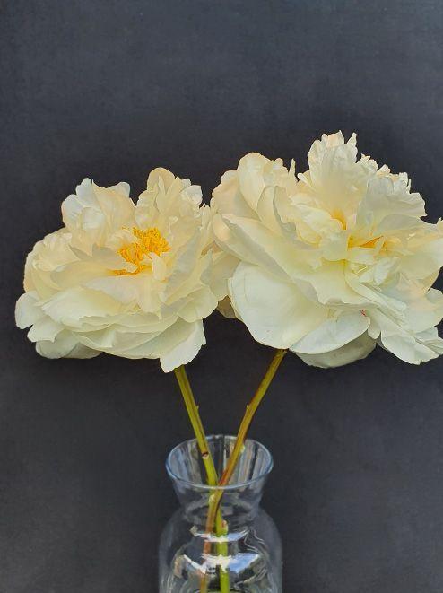 صورة لزهور بيضاء في مزهرية رسم لحركة تمرير تظهر كيف تعمل خاصية محسن المشهد على تحسين اللون والظلال Glass Vase Vase Decor