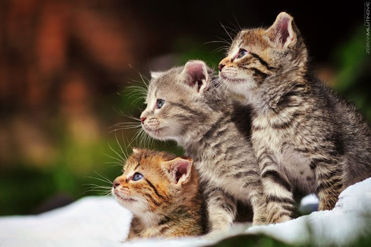 oh!!!: Kitty Cats, Pet, Cutest Kittens, Adorable, Families, Zoran Milutinov, Young, Cute Kittens, Animal