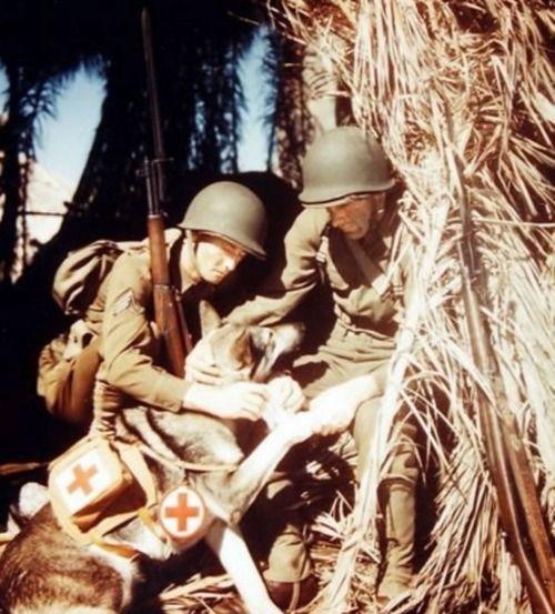 An American medic with his bandage bearing dog.