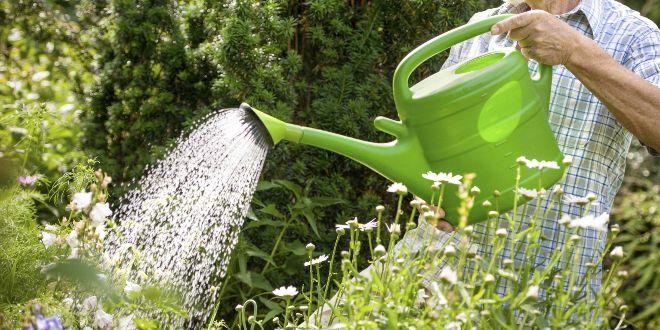 Alerte canicule : Nos conseils pour sauver vos plantes !