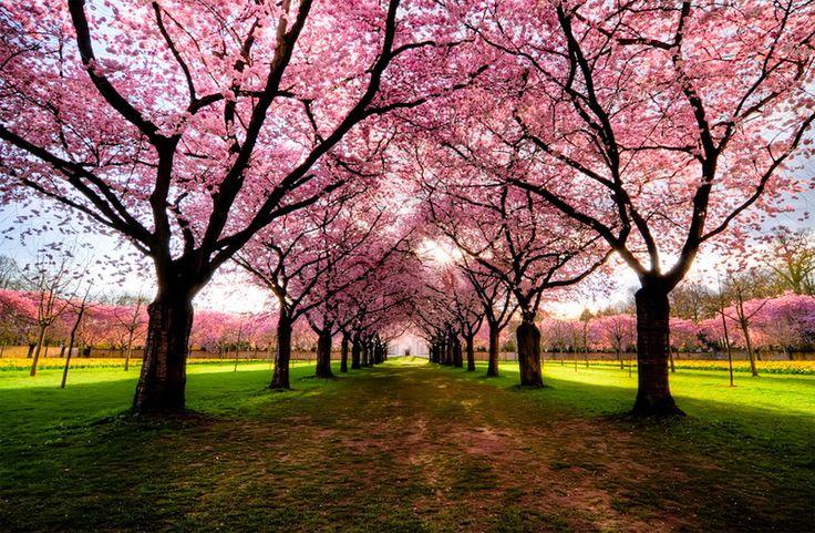 Las fotografías de árboles más hermosas del mundo 13