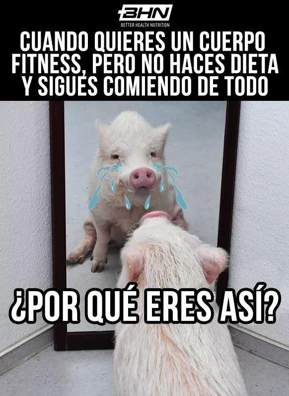 memes de dietas y ejercicios