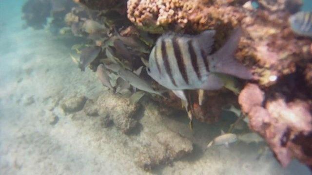 Gorpro underwater Camera Review  http://www.empowernetwork.com/davidwrightonline