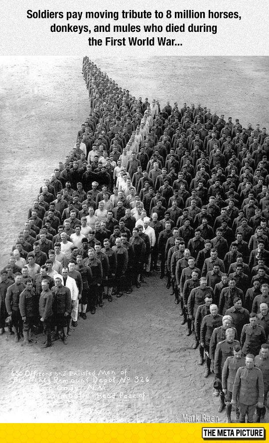 Soldiers Paying Tribute to the horses and donkeys that died                                                                                                                                                                                 More