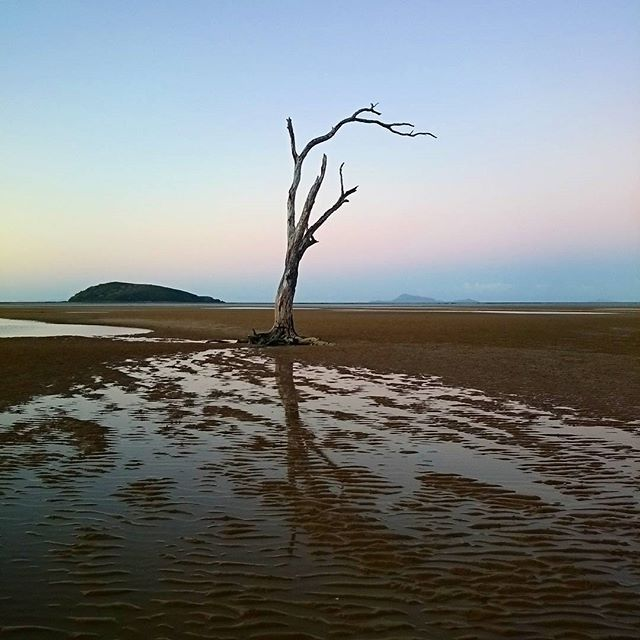 The infamous lone tree at Shoal Point #thisisqueensland by @briallyn