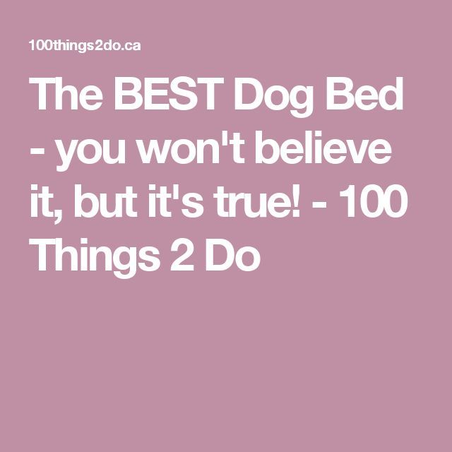 The BEST Dog Bed - you won't believe it, but it's true! - 100 Things 2 Do