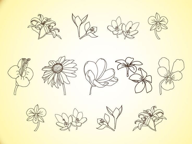 Free Simple Line Drawings | Vector Flower Line Illustrations