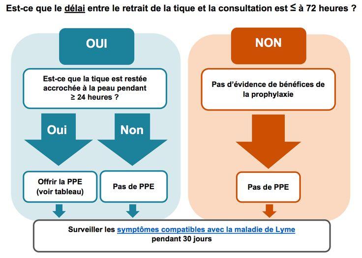 2/2 texte, le Dr Alain Vadeboncœur explique les règles de base du traitement, et explore la controverse sur la « maladie de Lyme invisible ».