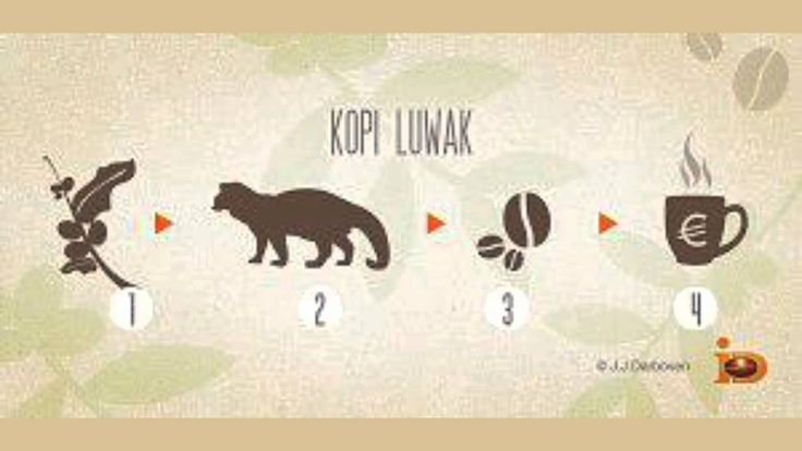 Civet Coffee or Kopi Luwak