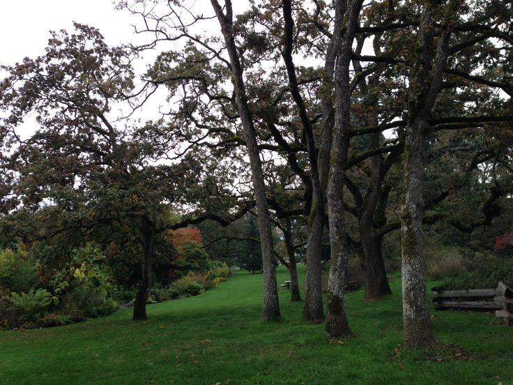 View of the Garry Oak trees.