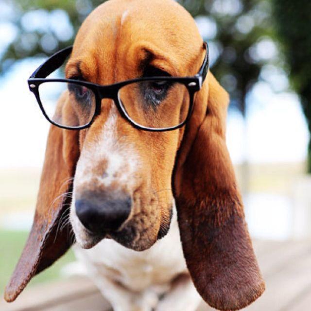 Smarty dog