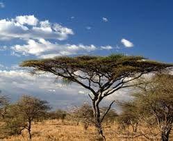 Bildergebnis für nationalpark manovo gounda st floris - Central African Republic