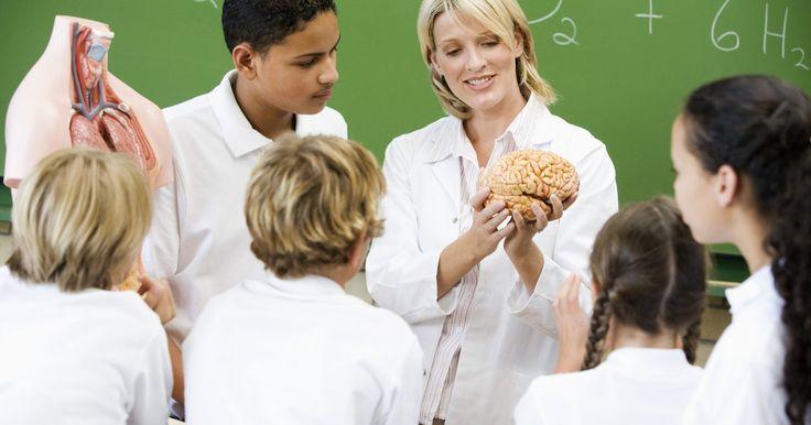¿Qué es el lóbulo frontal?. El cerebro se divide en cuatro secciones llamadas lóbulos. El lóbulo frontal es una de esas cuatro secciones. Las otras incluyen a los lóbulos parietal, occipital y temporal. Cada uno de estos lóbulos funciona de una forma específica; el lóbulo frontal está específicamente asociado a cómo razonamos y planeamos, las partes del lenguaje, la forma en ...