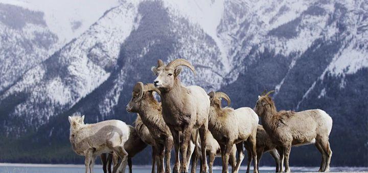 Alberta Canada – Banff Frozen in Time in 4K!