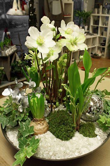 http://holmsundsblommor.blogspot.se/2011/12/vit-julgrupp.html Julgrupp med julros, helleborus, hyacinter, liljekonvaljer