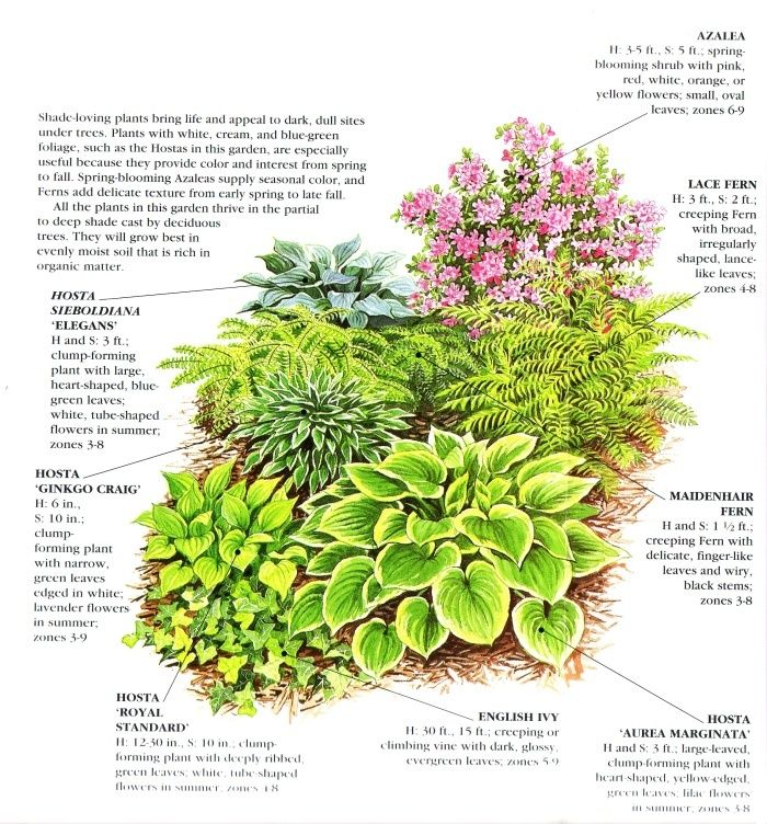 3110 best images about Gardening and Outdoor Spaces on