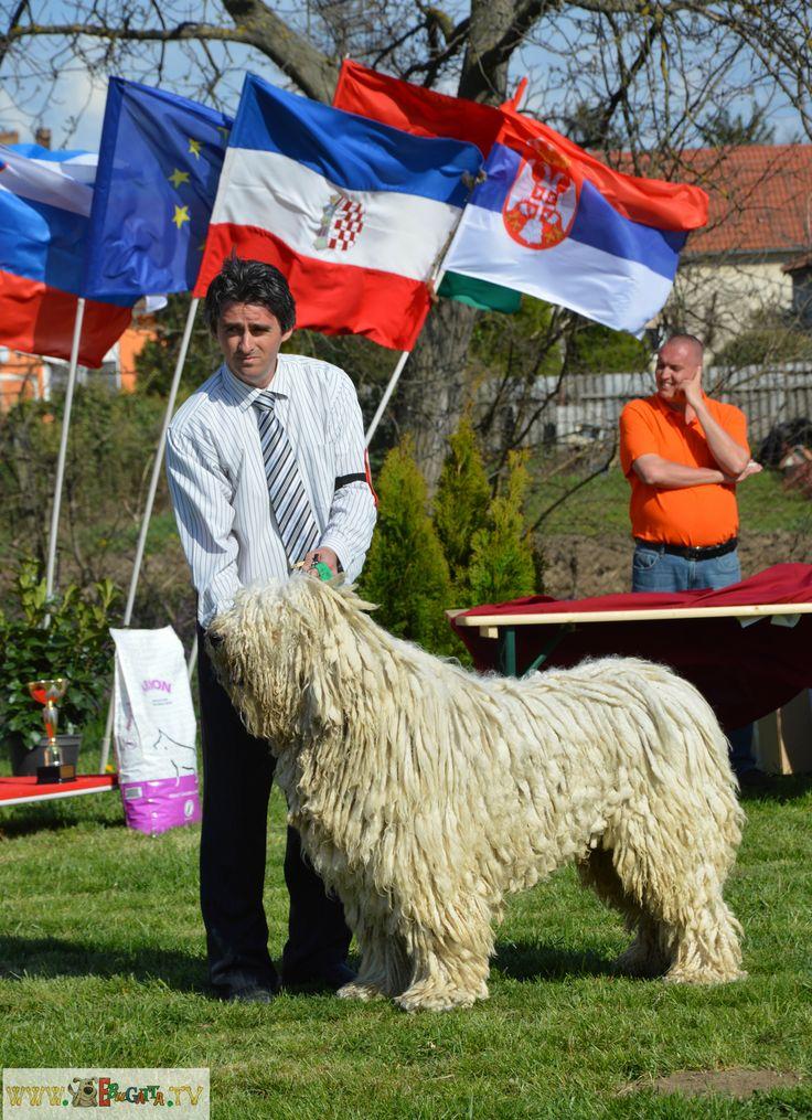 http://ebugatta.tv/hu/hirek/hirek/a-magyar-kutyafajtak-kiralya-a-komondor-lett-a-legszebb-eb-a-meoesz-pecsi-o-j-szervezet-kiallitasan-