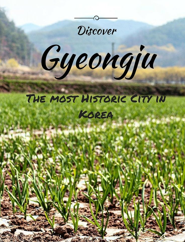 Discover the old capital of the Silla Dynasty - one of the longest sustained dynasties in the world and the best representation of Korea through the enchanting city of Gyeongju.