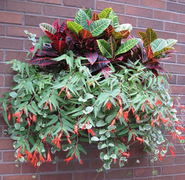 Vertical Garden Chicago: 138 Best Images About Hanging Colours On Pinterest