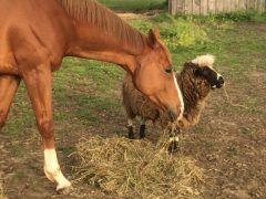 Barn Buddies: An OTTB And Her Black Sheep - Horse Racing News | Paulick Report