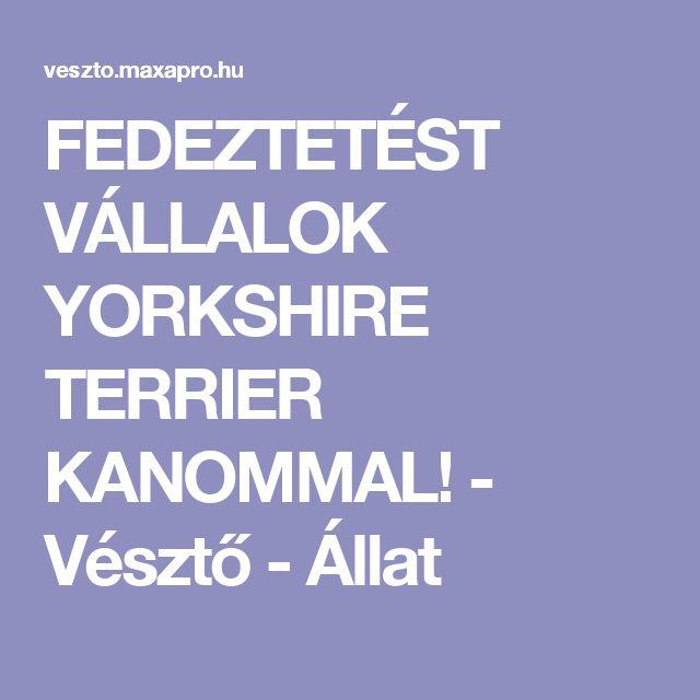 FEDEZTETÉST VÁLLALOK YORKSHIRE TERRIER KANOMMAL! - Vésztő - Állat
