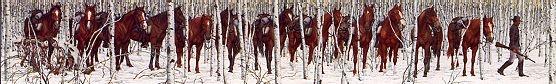 Two Indian Horses, Bev Doolittle