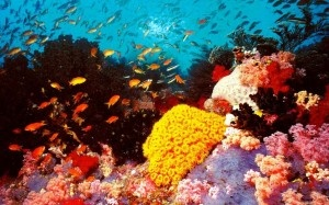 Great Barrier Reef, Australia - Travel Guide
