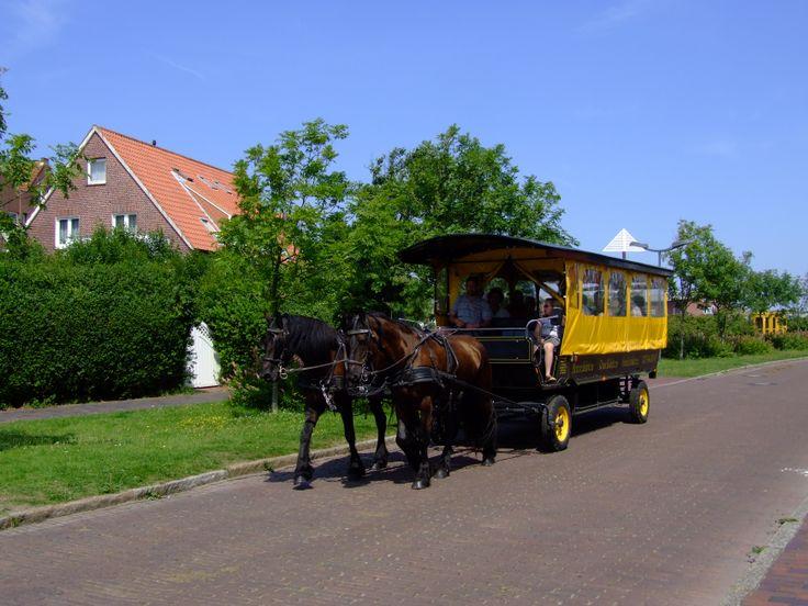 Auf Langeoog kann man tolle Planwagenfahrten unternehmen und dabei die Schönheiten der Insel kennenlernen.