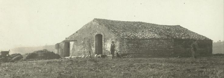 Bosco Pontoni, 1939, San Martino in Pensilis, Molise Italy